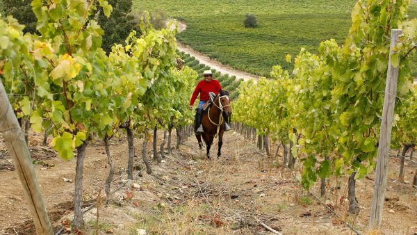 Magic in Chile: Taking a Wine Tour on Horseback