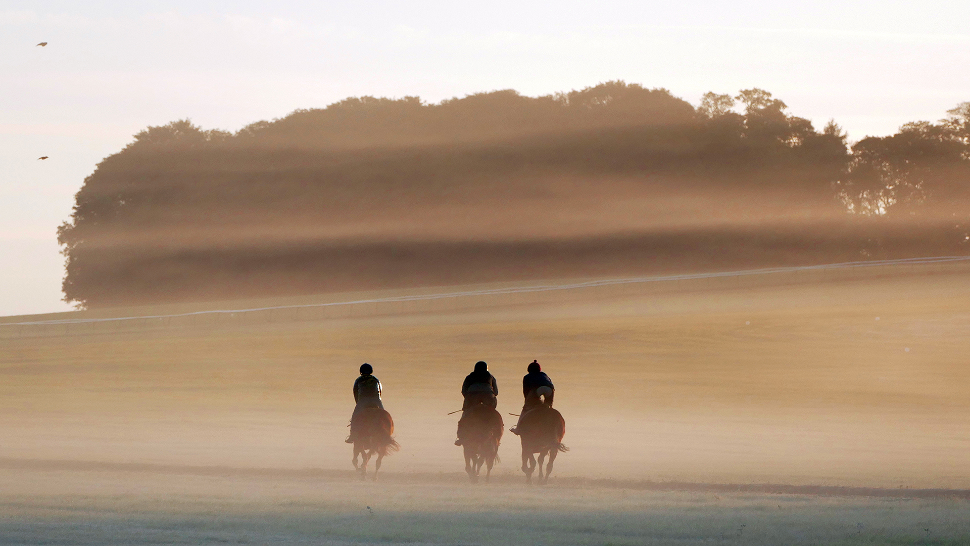 Newmarket: A Place of Wonder for the Racehorse