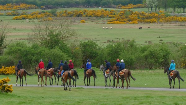 The Curragh: Ireland's Bedrock of Champions