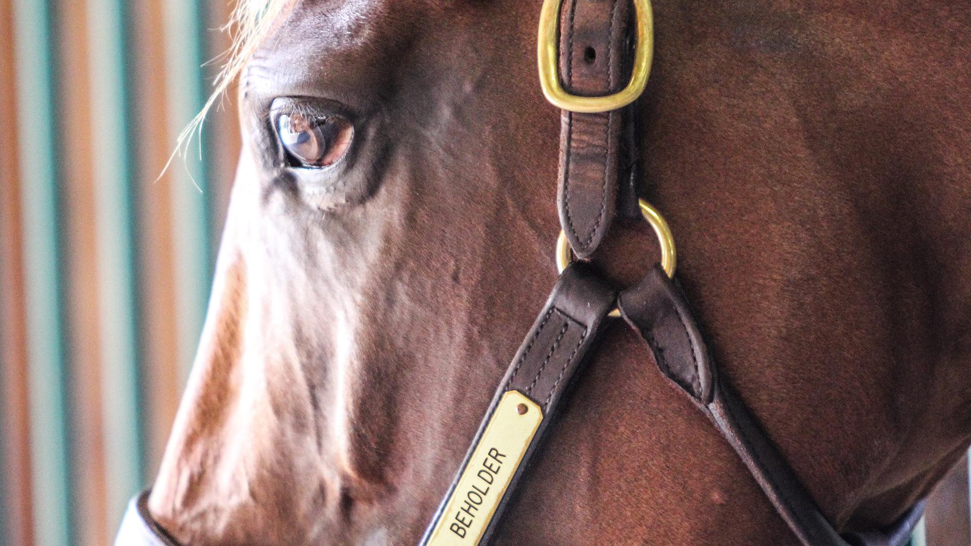 Behold Her: Meet Beholder's First Two Foals at Spendthrift Farm