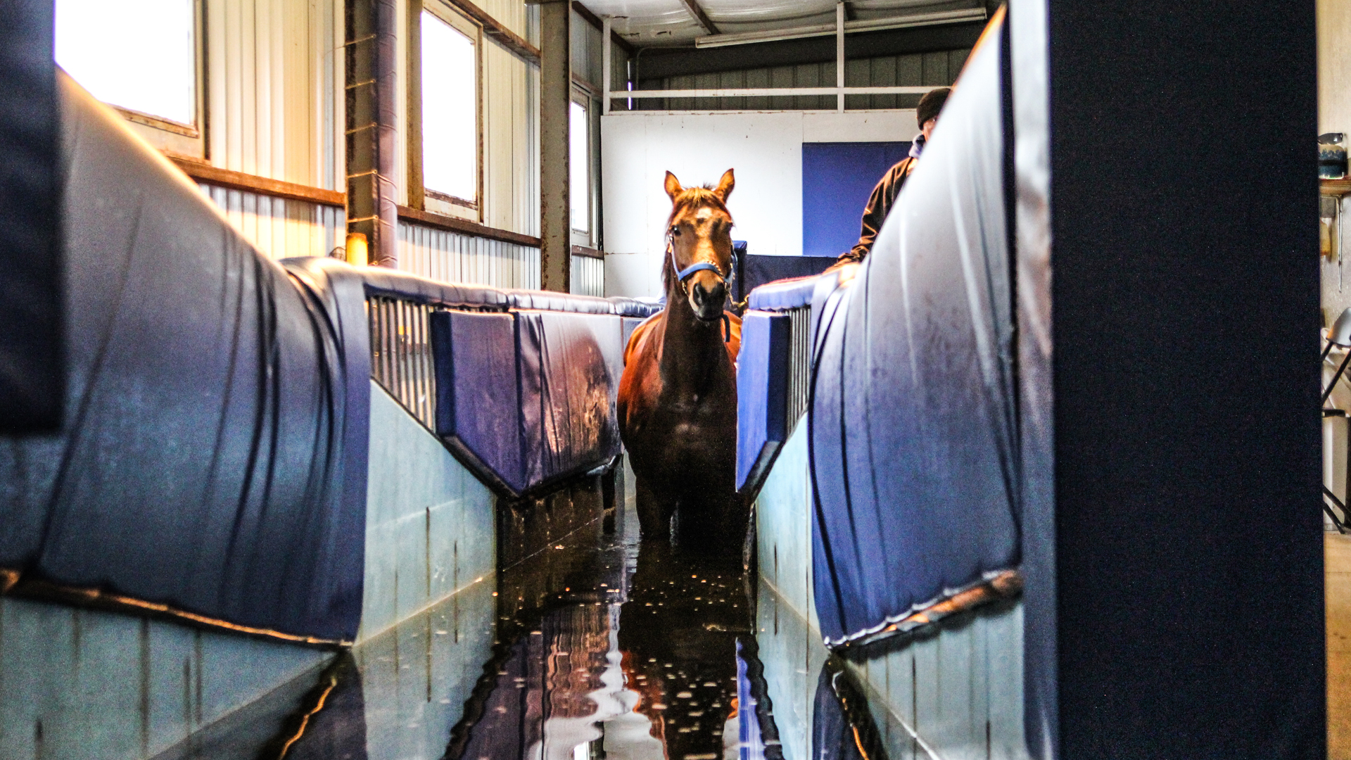 Kentucky Equine Sports Medicine and Rehabilitation Center Hits the 'Marc'